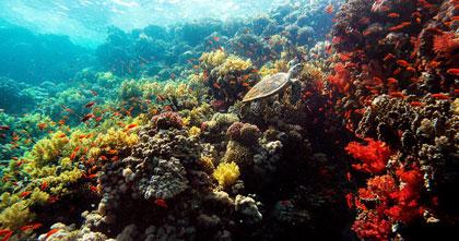 『ネイチャー』海底