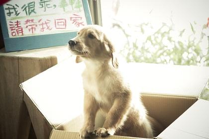 1分間だけ愛犬リラ
