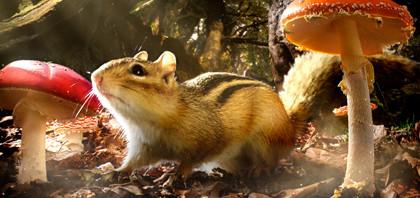 リスとマウスの冒険『小さな世界はワンダーランド』邦題決定!