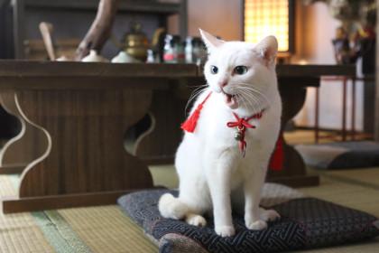 あなご猫侍-SEASON-2