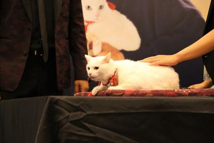 現地の白猫シャドウちゃん