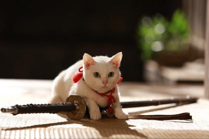 「猫侍」 玉之丞メイン