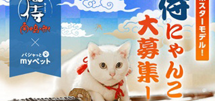 侍にゃんこ大募集『猫侍』×「パシャッとmyぺっと」フォトコンテスト開催