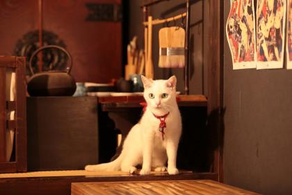 猫侍_あなご5