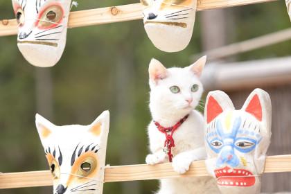 猫侍_あなご