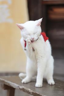 猫侍_あなご1