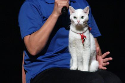 猫侍ティーチイン3