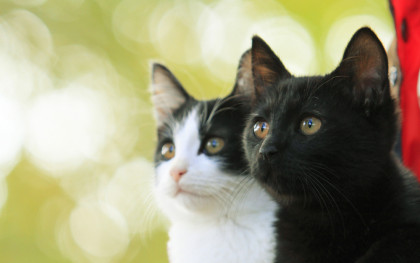 猫よん。WEB仮メイン