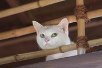 「猫侍 玉之丞、江戸へ行く」玉之丞3