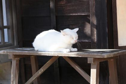 「猫侍 玉之丞、江戸へ行く」玉之丞