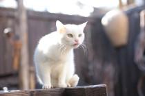 「猫侍 玉之丞、江戸へ行く」玉之丞5