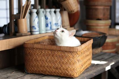 「猫侍 玉之丞、江戸へ行く」玉之丞2