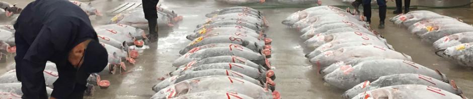四季折々の魚、築地の息遣いを映画化『TSUKIJI WONDERLAND』