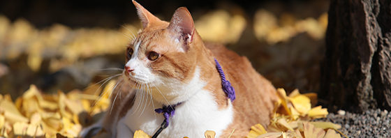 『猫忍 猫が見るDVD 父上の江戸ネコ歩き』の発売決定!