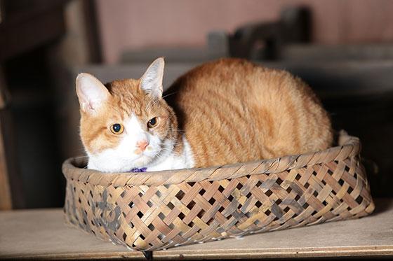 『猫忍』上海国際映画祭へ!パノラマ部門への出品決定!