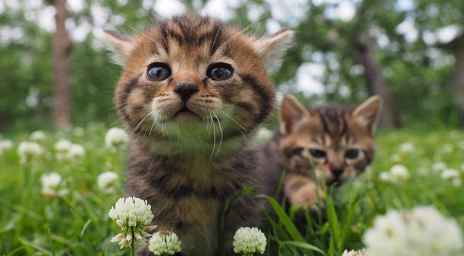 「劇場版 岩合光昭の世界ネコ歩き」津軽追撮メイキング写真到着