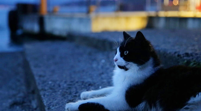 リアル トム&ジェリー「猫とネズミのかくれんぼ」が見どころ映像到着!『猫が教えてくれたこと』