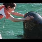 『ボクはボク、クジラはクジラで、泳いでいる。』特報と場面写真解禁!
