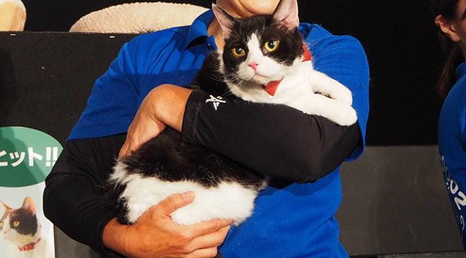 ナナ、春馬、あなご、金時 スター猫大集合!「旅猫リポート」勝手に!?ネコデミー賞授賞式