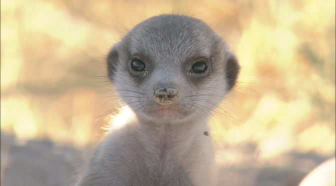 『ダーウィンが来た! 生きもの新伝説』動物たちの写真を一挙解禁