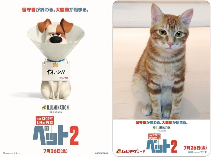お行儀よく留守番できない彼らが、この夏帰ってくる!『ペット2』全国公開が7月26日に決定