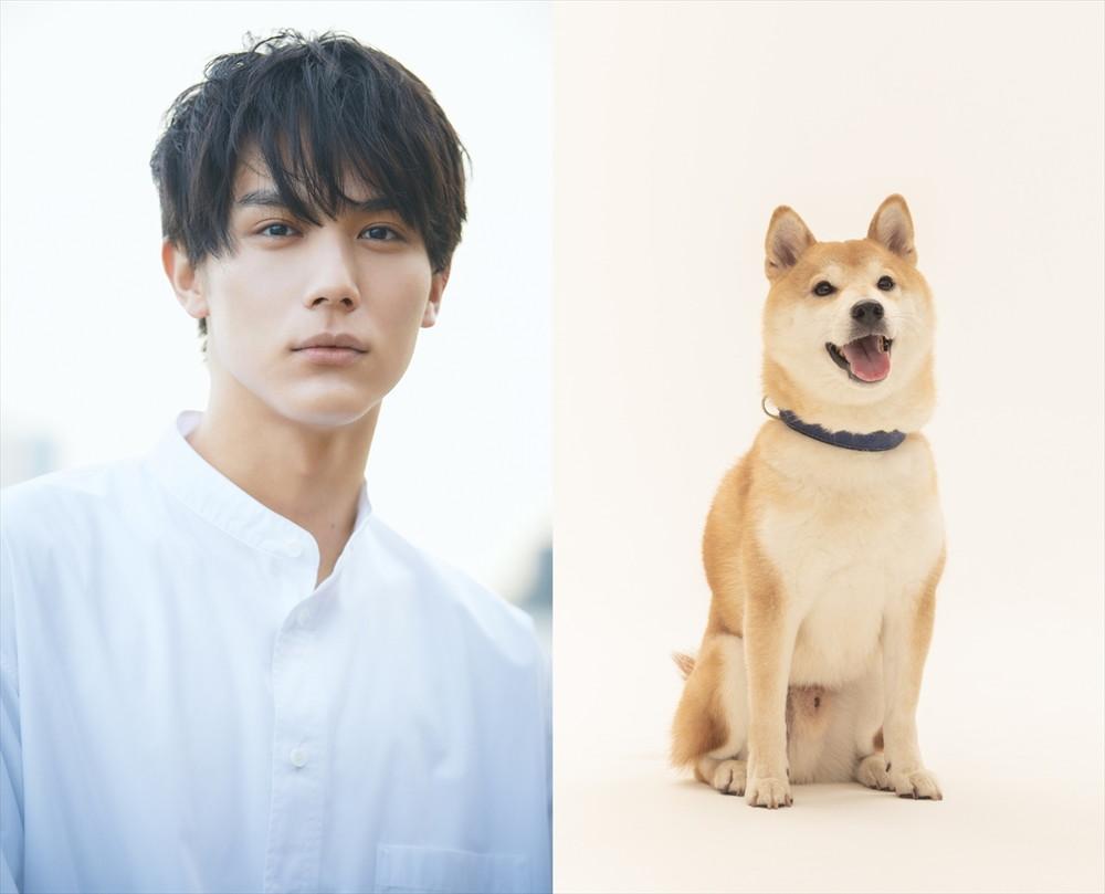 中川大志『犬部!』