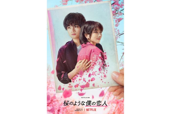 『桜のような僕の恋人』